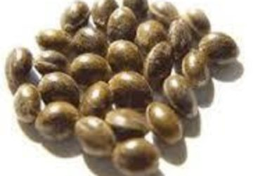 G.G. Seeds (5-for-$10)